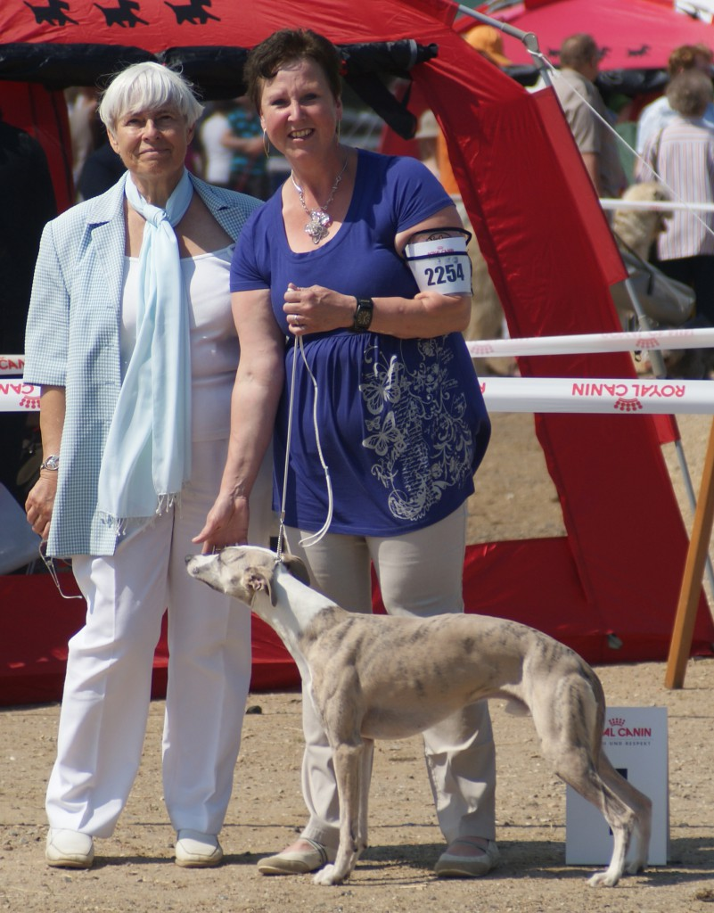 BOB in Neumünster, at an age of 11 months! judge Mrs. H. Ashenmacher-Feyel. At this show he also was best Junior of the Sighthound Group